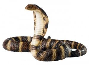 ular di gudang kayu